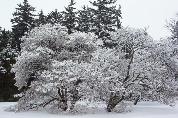 flower-pics-hawthorns-at-arboretum1.jpg