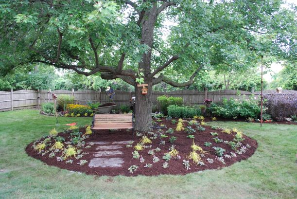 dwn maple tree bed after picture