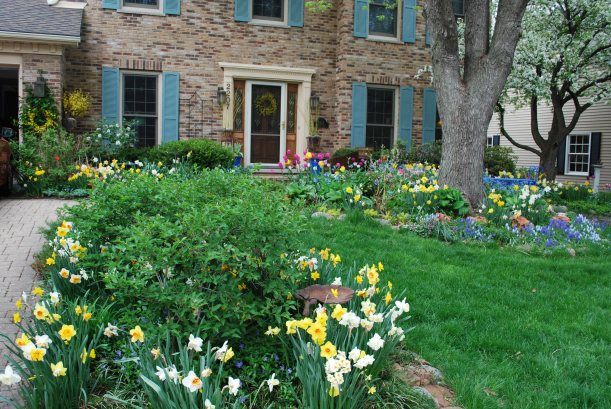 dwn my front yard april bulbs all in bloom 2011