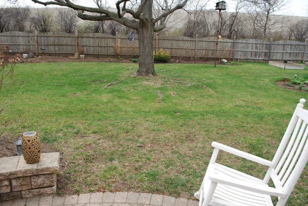 dwn petty before pic looking from south patio to maple tree