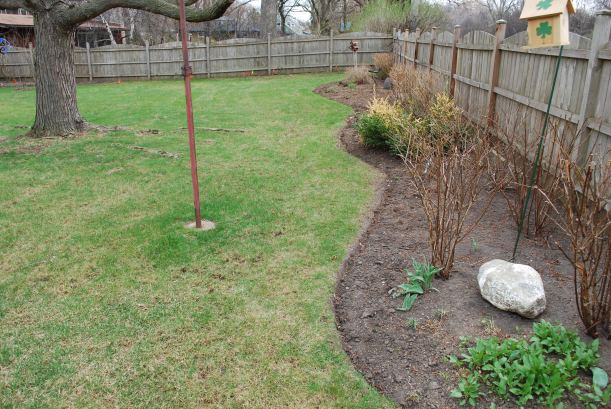 dwn petty before pic of west side of new maple tree bed