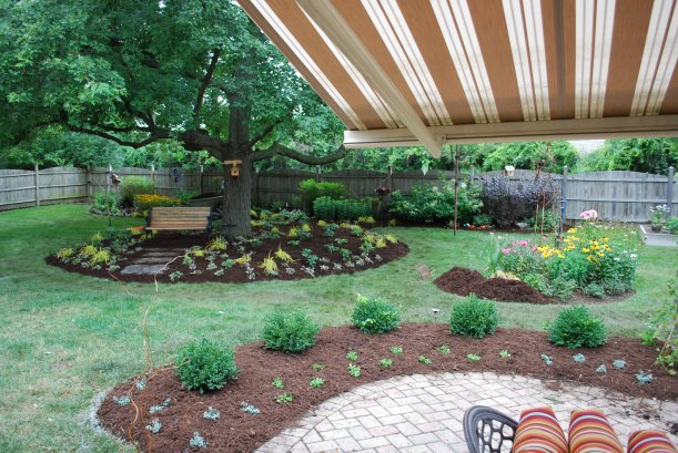 dwn petty maple tree bed viewed an angle from patio