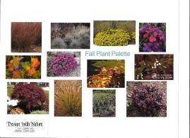 dwn thompson plan fall plant palette 4-26-16