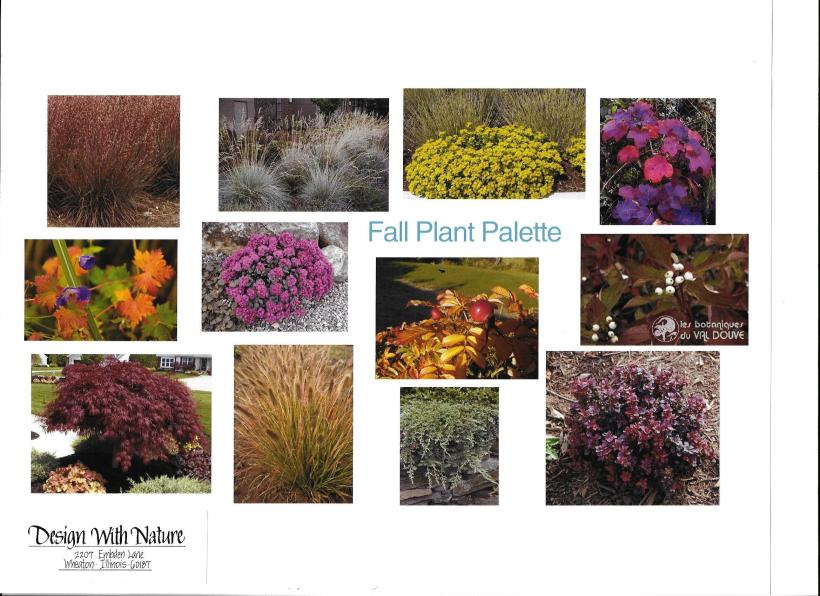 dwn thompson plan fall plant palette 4-26-16
