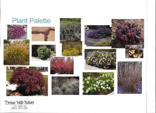 dwn thompson plan general plant palette 4-26-16
