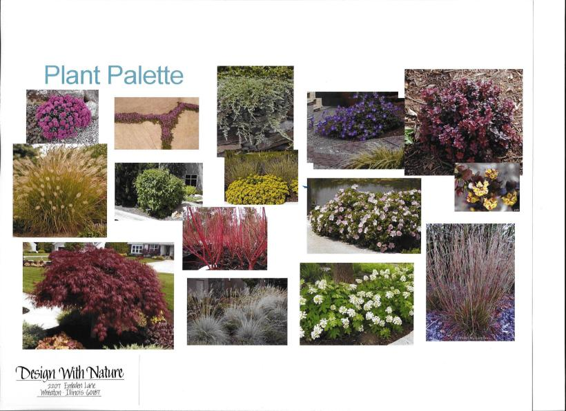 dwn thompson plan general plant palette 4-26-16