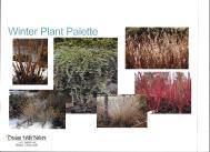 dwn thompson winter plant color palette 4-26-16