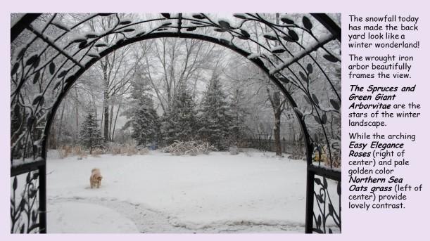 black arbor feb. snow