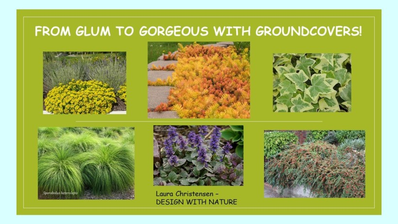 DWN GCI groundcovers cover photo for blog