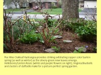dwn my front yd in spring 4 slides for blog 5-6-18 slide 4 of 4