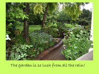 DWN my garden walk 6-22-18 slide 3 of 7