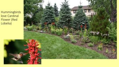 DWN Peters pollinator garden 8-3-18 slide 4 of 4