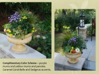 faris patio pots with sedges and asters