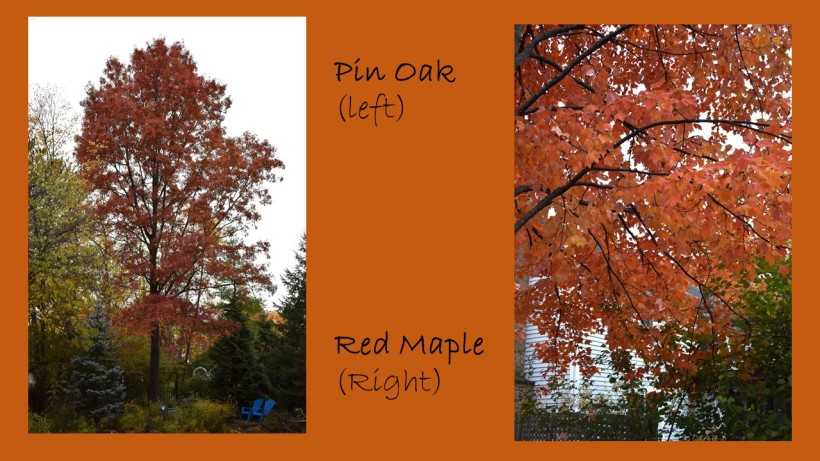DWN fall colors 9 of 15